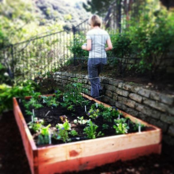 A garden is born in Topanga
